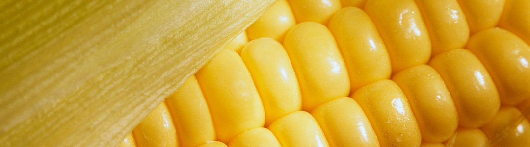Corn in Husk