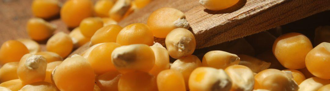 popcorn brazil